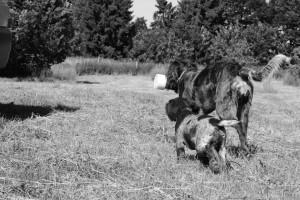 greta-welpe-grau